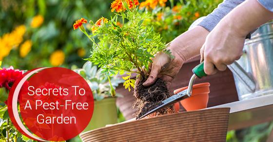 Pest-Free Garden